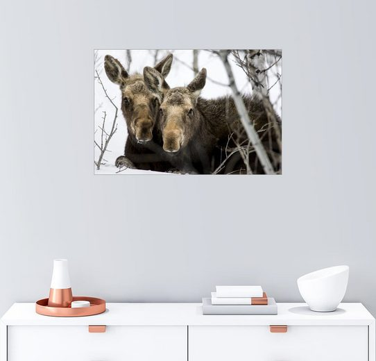Posterlounge Wandbild - Tom Norring »Moose im Grand Teton Nationalpark«