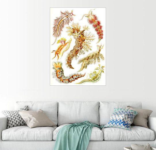 Posterlounge Wandbild - Ernst Haeckel »Meeresschnecken«