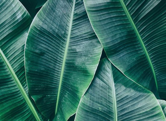 living walls Fototapete »Designwalls Banana Leaves 1«, glatt, (5 St)