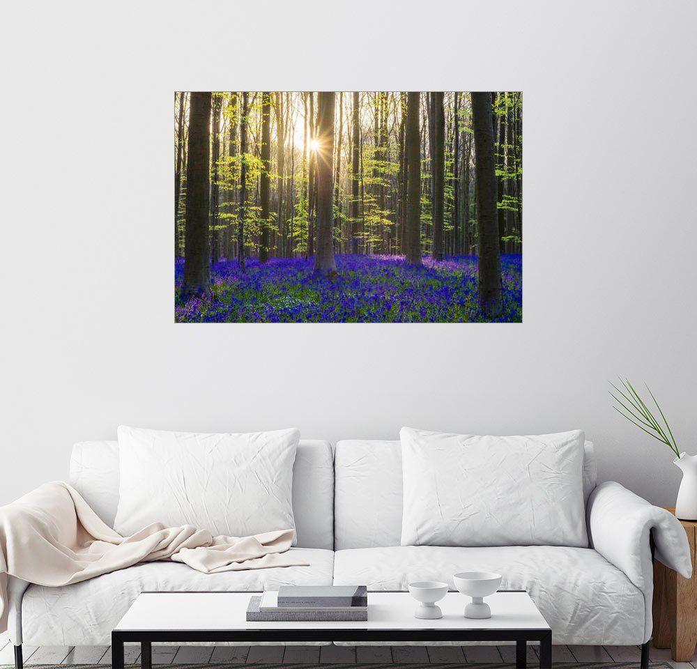 Posterlounge Wandbild - Jason Langley »Bluebell flowers (Hyacinthoides non-scripta) ...«