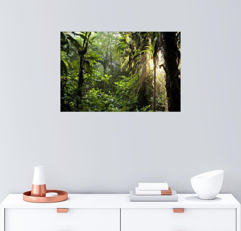 Posterlounge Wandbild - Peter Schickert »Sonnenstrahlen im Dschungel«