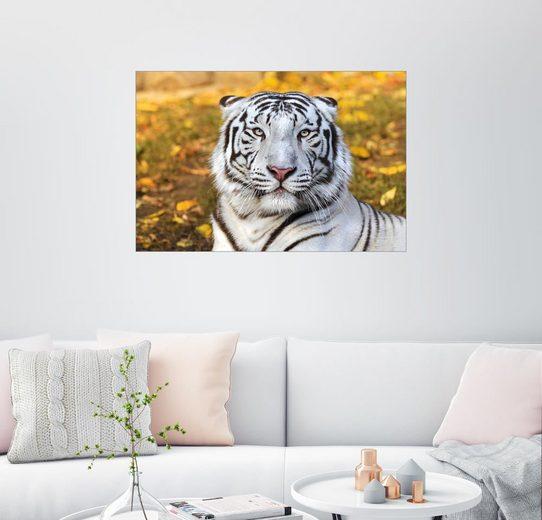 Posterlounge Wandbild »Weißer Tiger in Nahaufnahme«
