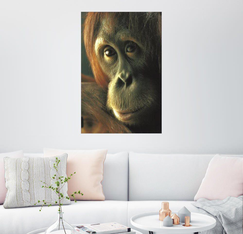 Posterlounge Wandbild - Michael Nichols »Portrait eines Orang-Utans«