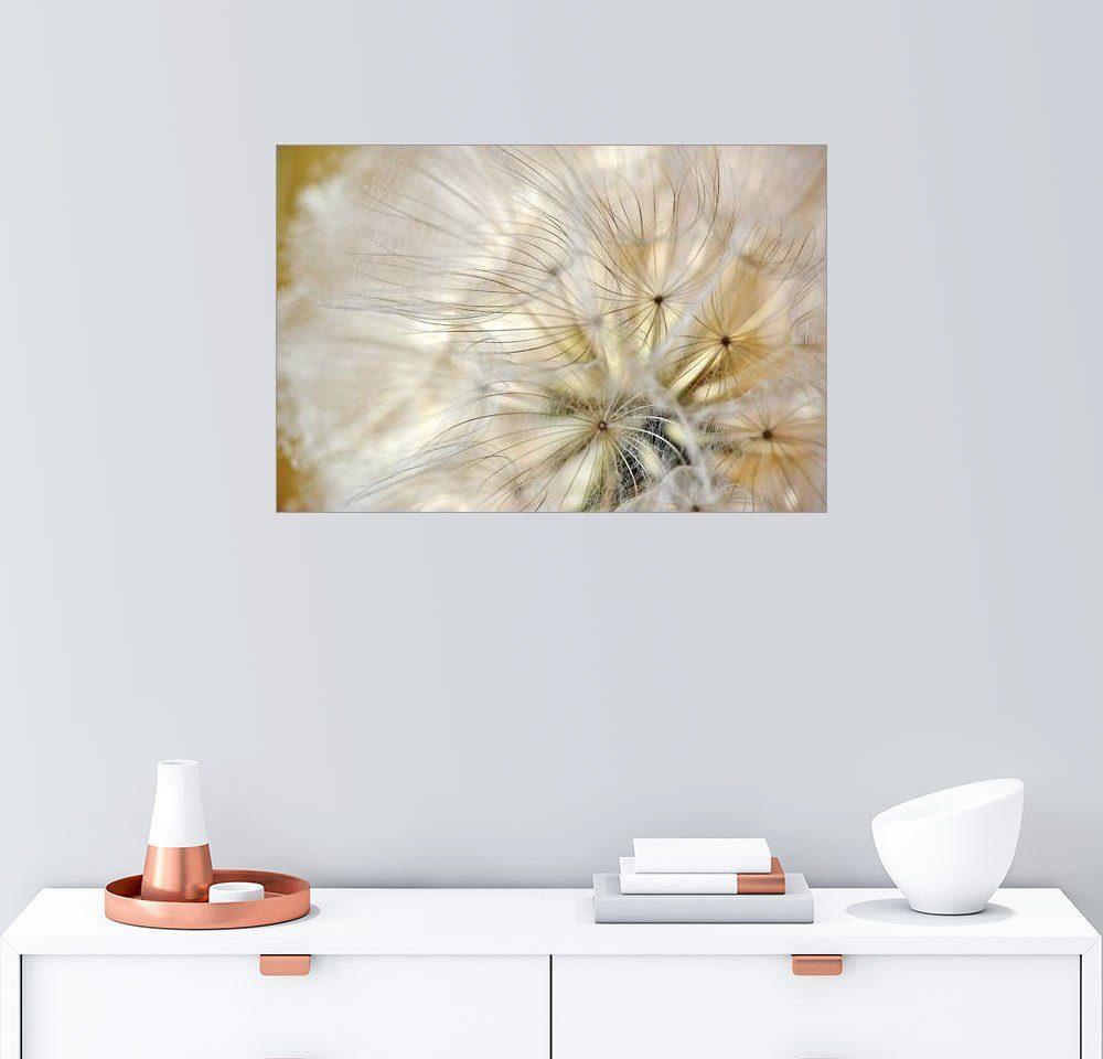 Posterlounge Wandbild - Julia Delgado »Pusteblume soft«