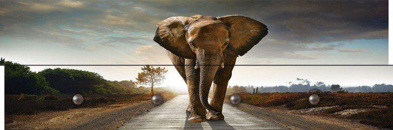 Artland Wandgarderobe »Carlos Caetano: Elefant läuft auf einer Straße«