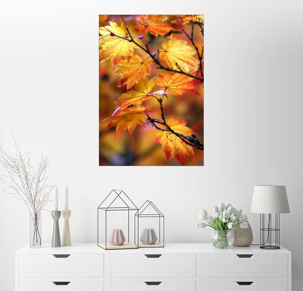 Posterlounge Wandbild - Janell Davidson »Ahornblätter im Herbst« | Dekoration > Bilder und Rahmen > Bilder | Orange | Posterlounge