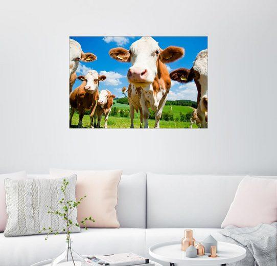 Posterlounge Wandbild »Neugierige Kühe«