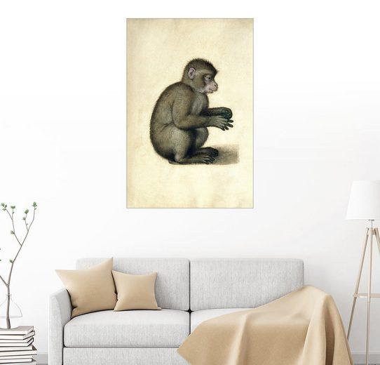 Posterlounge Wandbild - Albrecht Dürer »Ein Affe«