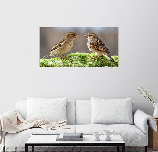 Posterlounge Wandbild - WildlifePhotography »Vögel Spatzen«