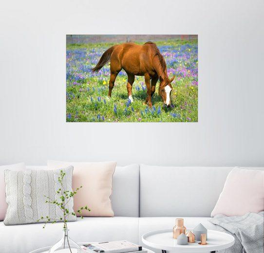 Posterlounge Wandbild - Darrell Gulin »Pferd auf einer Wiese mit Wildblumen«