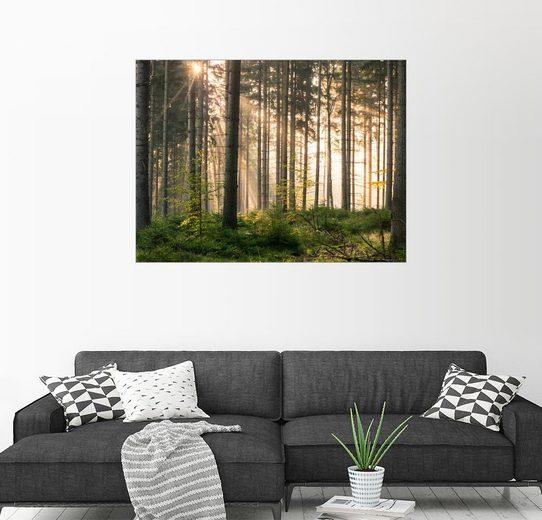 Posterlounge Wandbild - Andreas Wonisch »Sonnenlicht im herbstlichen Wald«
