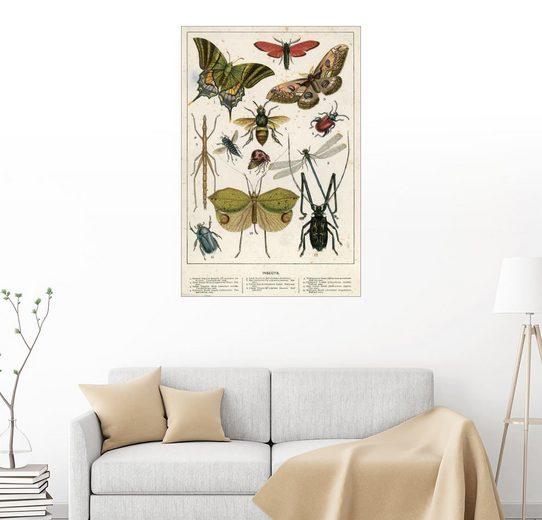 Posterlounge Wandbild - English School »Insects«