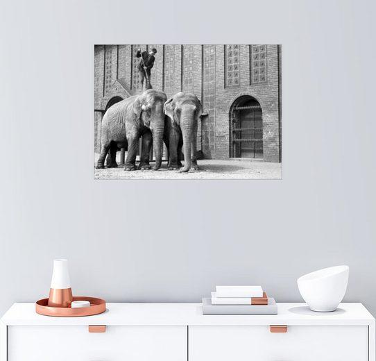 Posterlounge Wandbild - Klaus Morgenstern »Elefanten im Leipziger Zoo 1959«