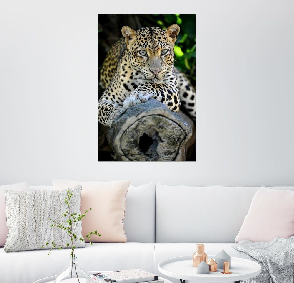 Posterlounge Wandbild »Afrikanischer Leopard«