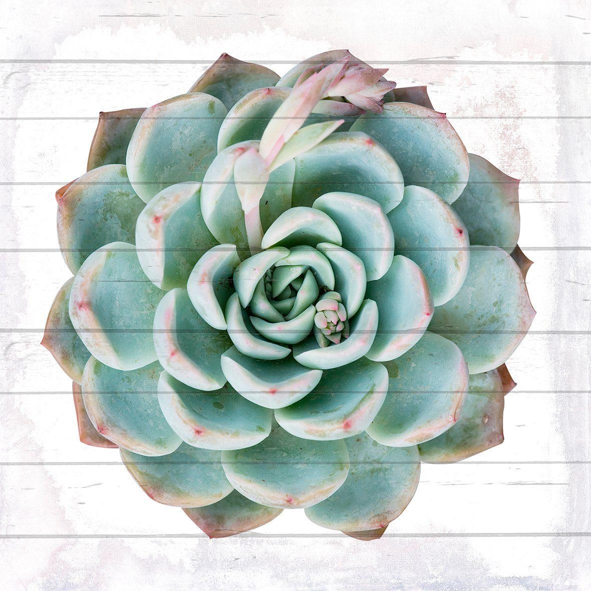 QUEENCE Holzbild »Kaktuspflanze«, 40x40 cm Echtholz