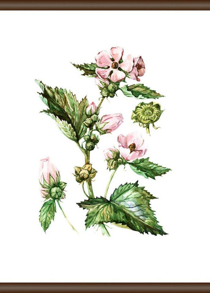 QUEENCE Leinwand »Pflanzen Anatomie«, Leinwand Rollbild 50x70 cm ...