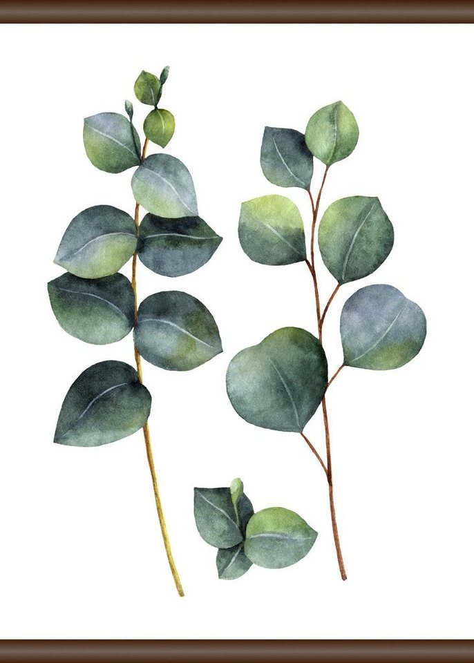 queence leinwand eukalyptus pflanze leinwand rollbild. Black Bedroom Furniture Sets. Home Design Ideas