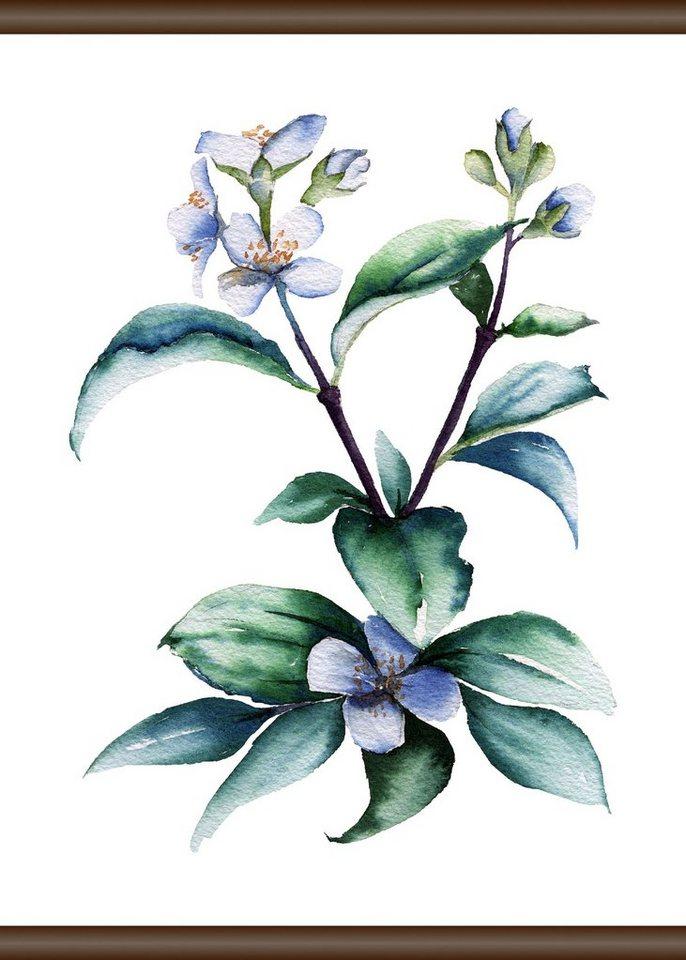 QUEENCE Leinwand »Lila Pflanze«, Leinwand Rollbild 50x70 cm online ...