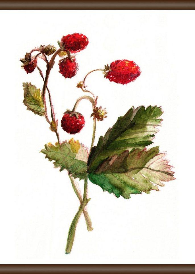 QUEENCE Leinwand »Erdbeer Pflanze«, Leinwand Rollbild 50x70 cm ...