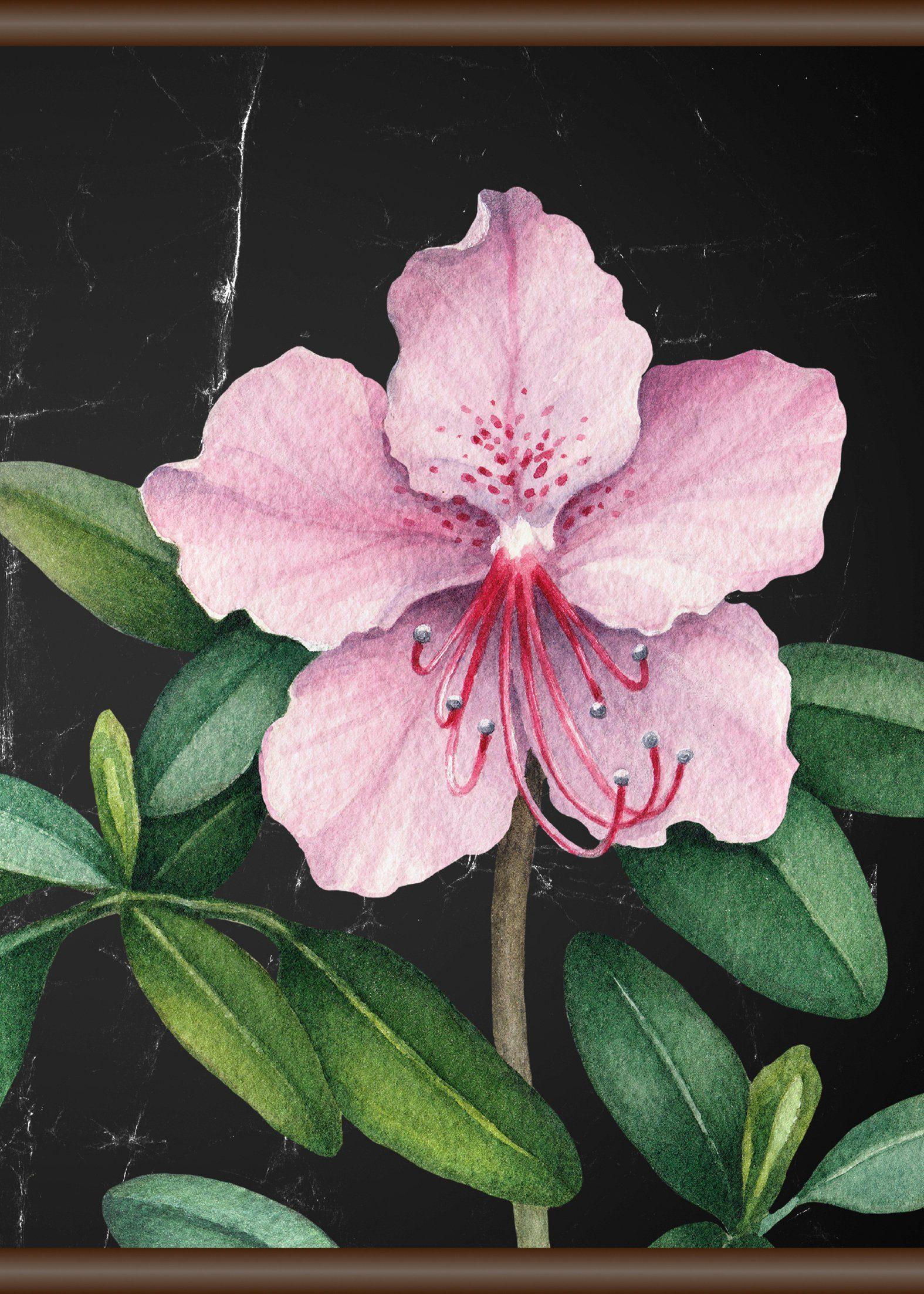 QUEENCE Leinwand »Rosa Blüte«, Leinwand Rollbild 50x70 cm