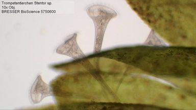 Bresser Mikroskop  Bioscience 40-1000x Trinokulares Trinokulares Trinokulares Mikroskop  online kaufen 97c393