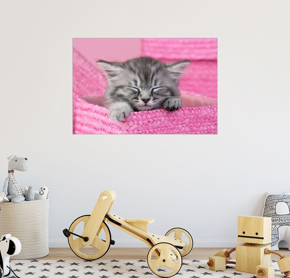 Posterlounge Wandbild - Greg Cuddiford »Schlafendes Kätzchen« | Dekoration > Bilder und Rahmen > Bilder | Rosa | Posterlounge