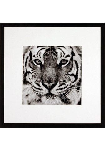 G&C G&C paveikslas »TIGER«