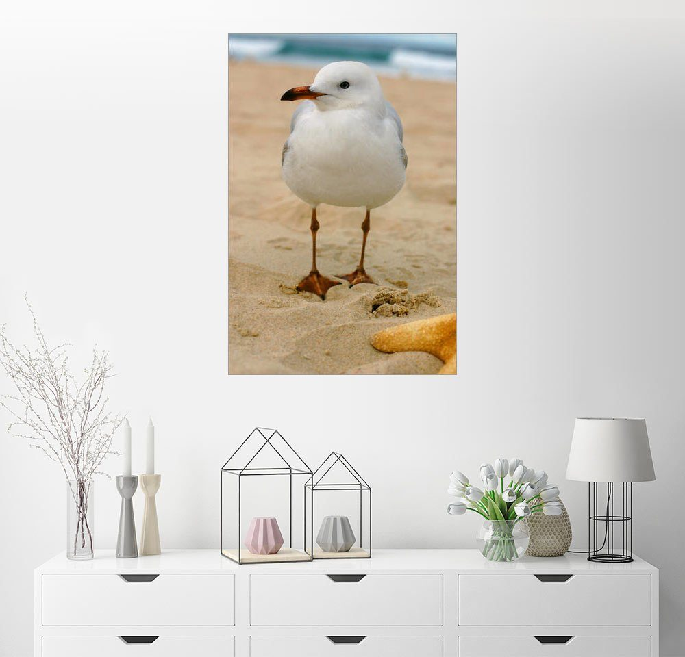 Posterlounge Wandbild »Möwe im Sand«