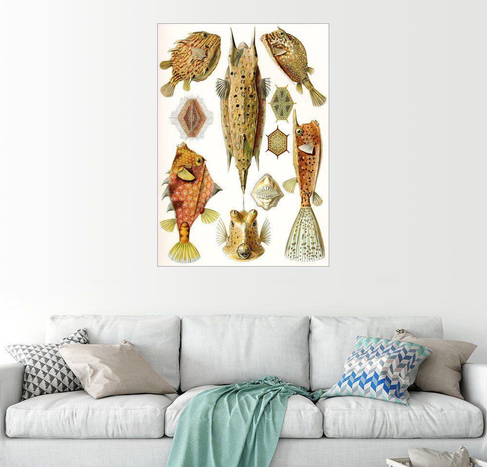 Posterlounge Wandbild - Ernst Haeckel »Knochenfische«