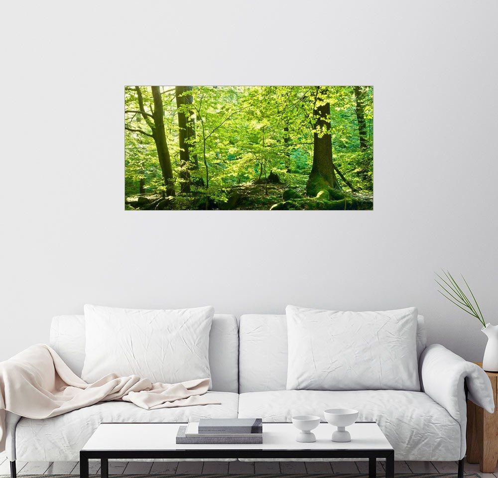 Posterlounge Wandbild - Steffen Gierok »Frühlingswald« | Dekoration > Bilder und Rahmen > Bilder | Holz | Posterlounge