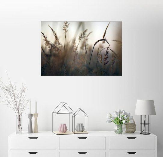 Posterlounge Wandbild - Jim Richardson »Blick auf Gräser an einem nebligen Herbstmorgen«
