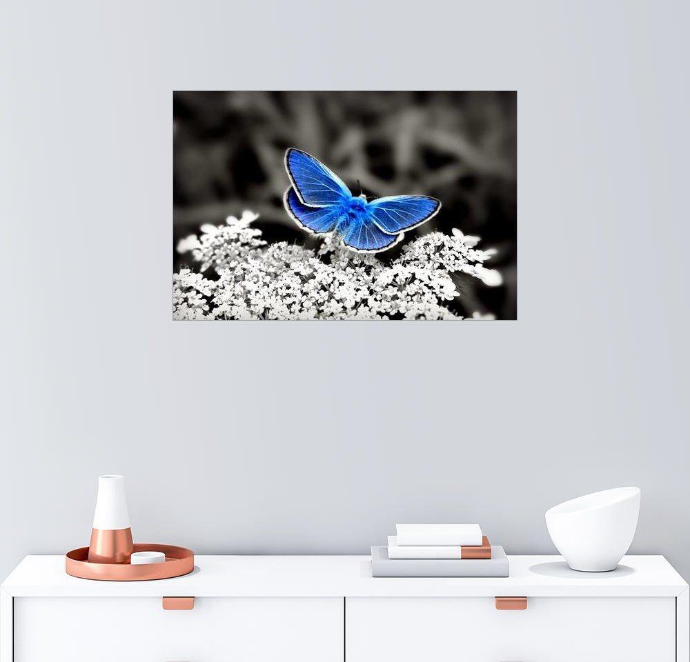 Schmetterling blau preisvergleich die besten angebote online kaufen - Wandbild petrol ...