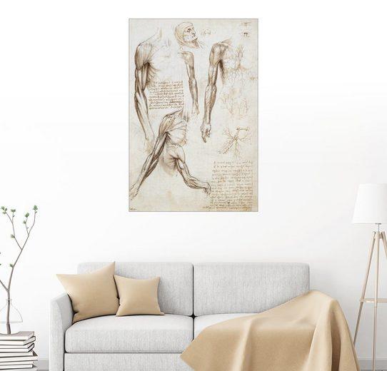Posterlounge Wandbild - Leonardo da Vinci »Muskeln eines Mannes«