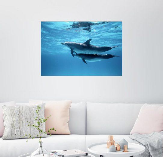 Posterlounge Wandbild - Wolcott Henry »Zwei Delfine im strahlenden Wassser nahe der ...«