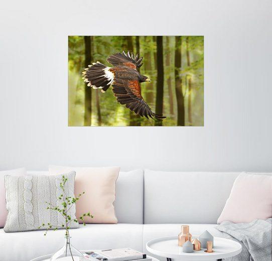 Posterlounge Wandbild - WildlifePhotography »Greifvogel«