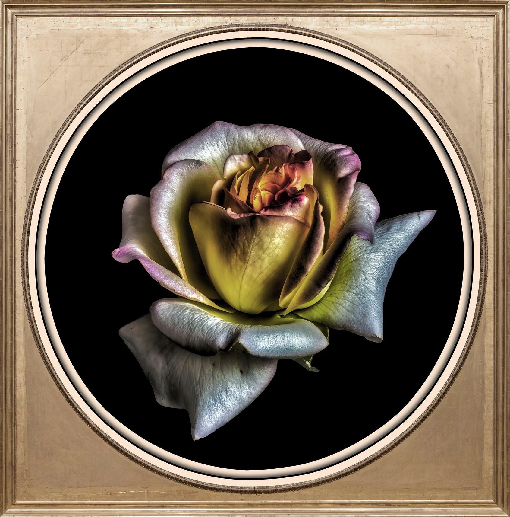 rose-glas Bilder online kaufen | Möbel-Suchmaschine | ladendirekt.de
