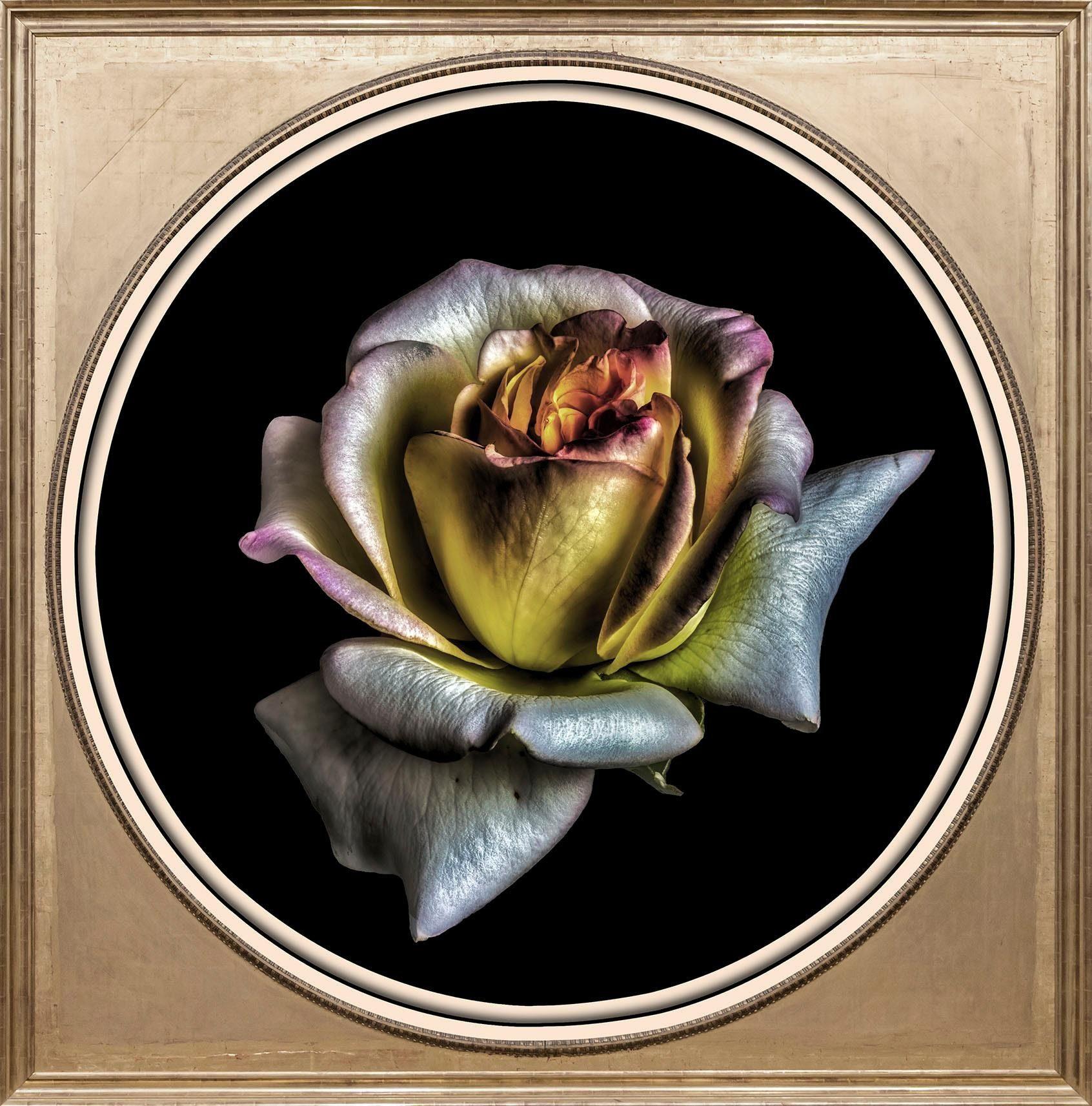 Acrylglasbild »Rose«