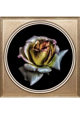 Paveikslas »Rose«