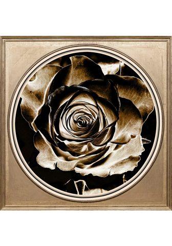 Paveikslas »Rose Sepia«