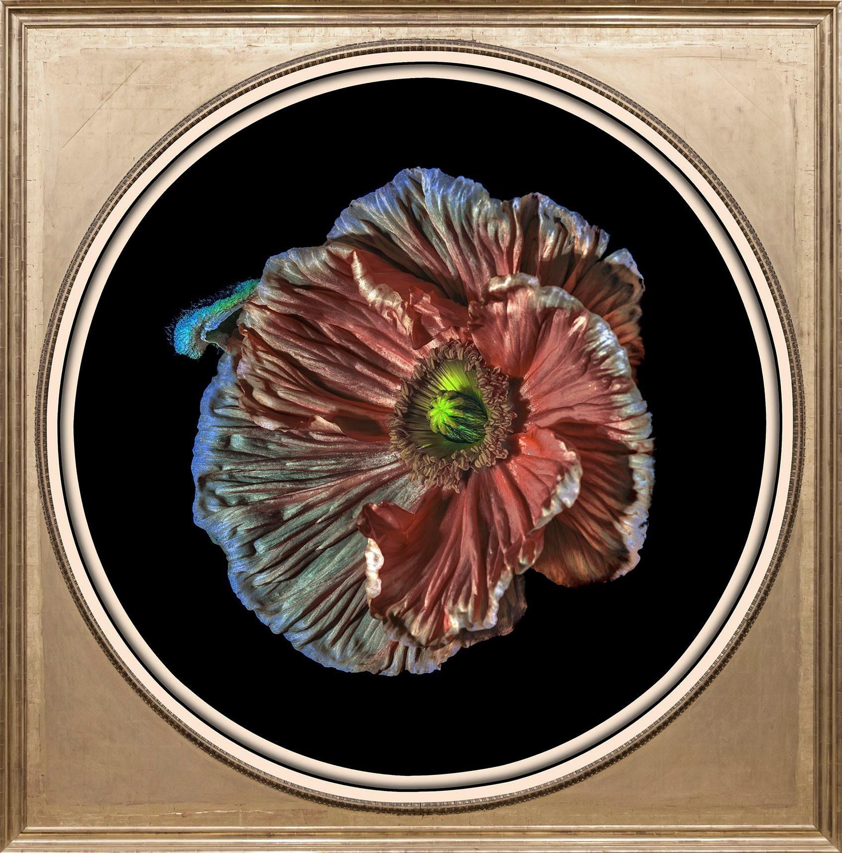 Acrylglasbild »Blüte«
