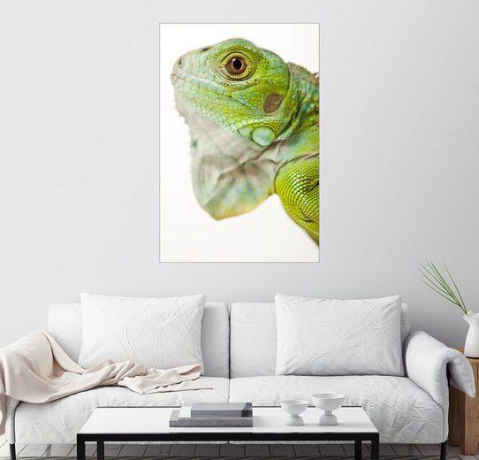 Posterlounge Wandbild »Grüner Leguan im Profil«