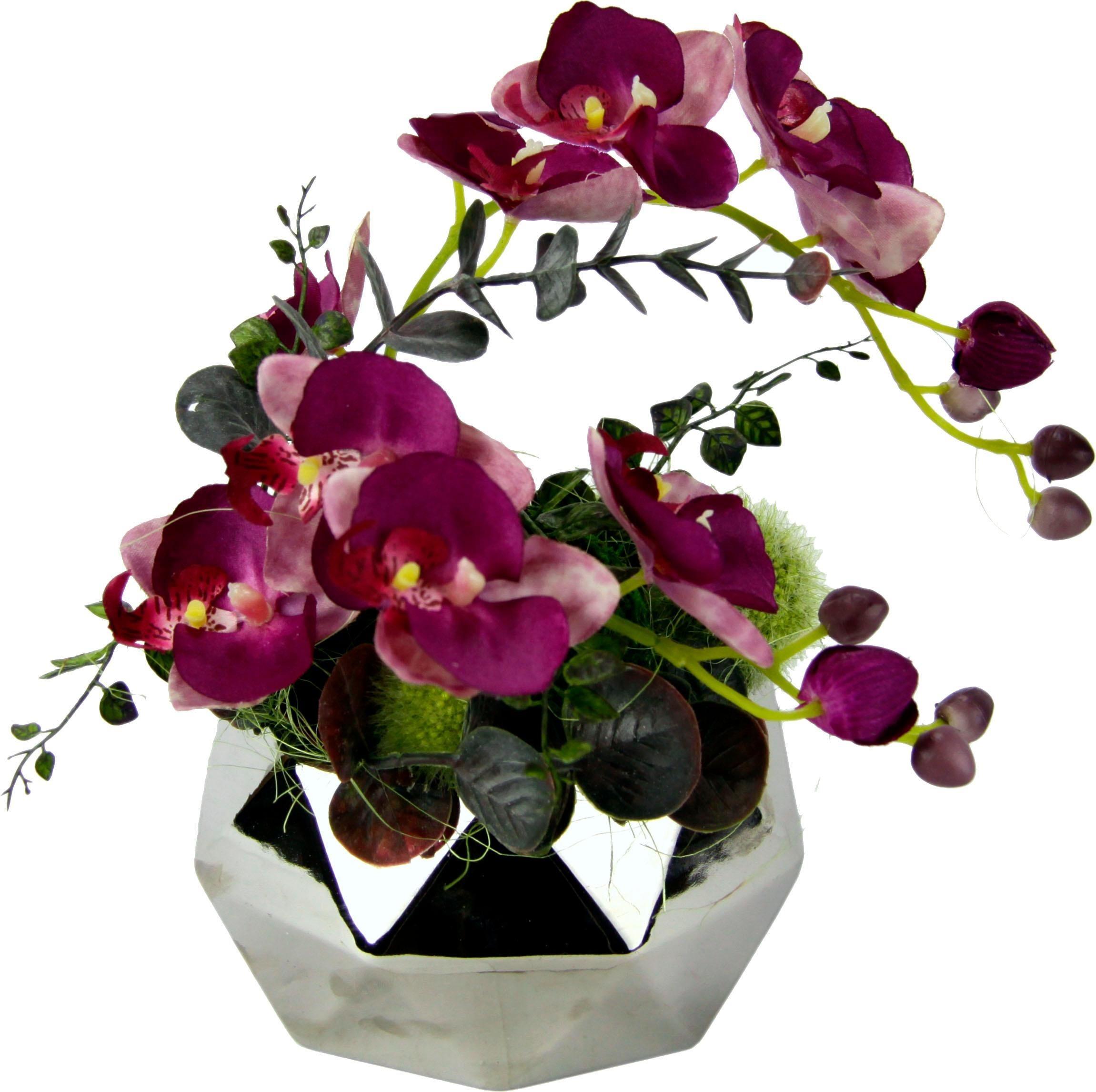 topf orchidee preisvergleich die besten angebote online kaufen. Black Bedroom Furniture Sets. Home Design Ideas