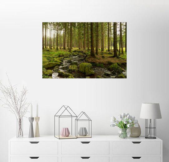 Posterlounge Wandbild - Oliver Henze »Wald mit Bachlauf«