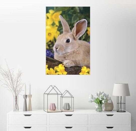 Posterlounge Wandbild - Greg Cuddiford »Osterhäschen«