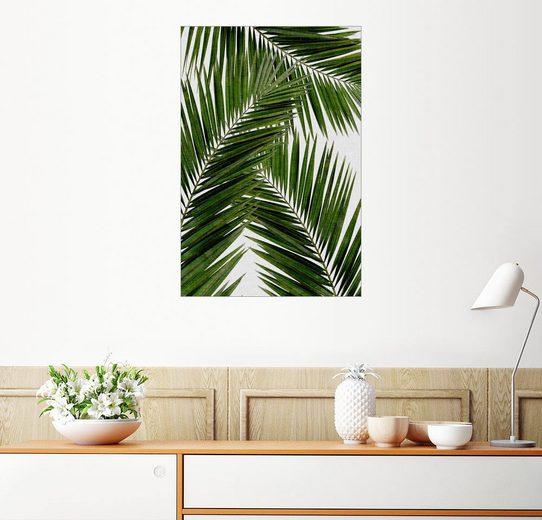 Posterlounge Wandbild - Orara Studio »Palmblatt III«