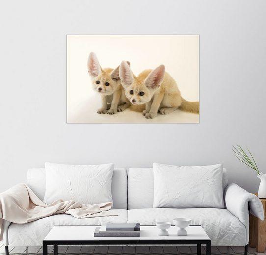 Posterlounge Wandbild - Joel Sartore »Zwei, zehn Wochen alte Fennec Fox Kits«