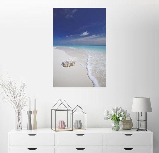Posterlounge Wandbild - Sakis Papadopoulos »Koralle an weißem Sandstrand«