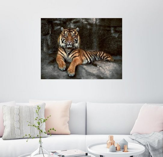 Posterlounge Wandbild - Joachim G. Pinkawa »Dschungelkönig«