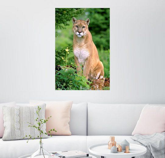 Posterlounge Wandbild - Norbert Rosing »Puma«