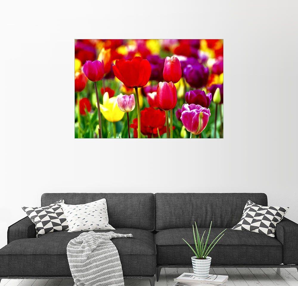 Posterlounge Wandbild - Ric Ergenbright »Bunte Tulpen in einem Feld«